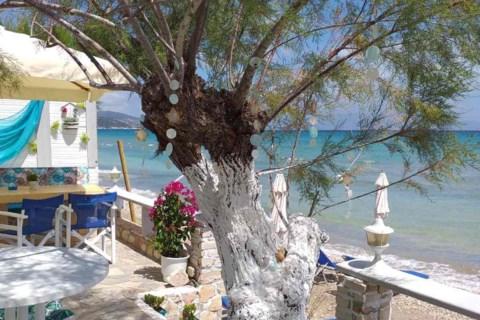 Golden Dolphin Studios Zakynthos Greece